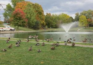 Joies et beautés automnales dans la région du Niagara